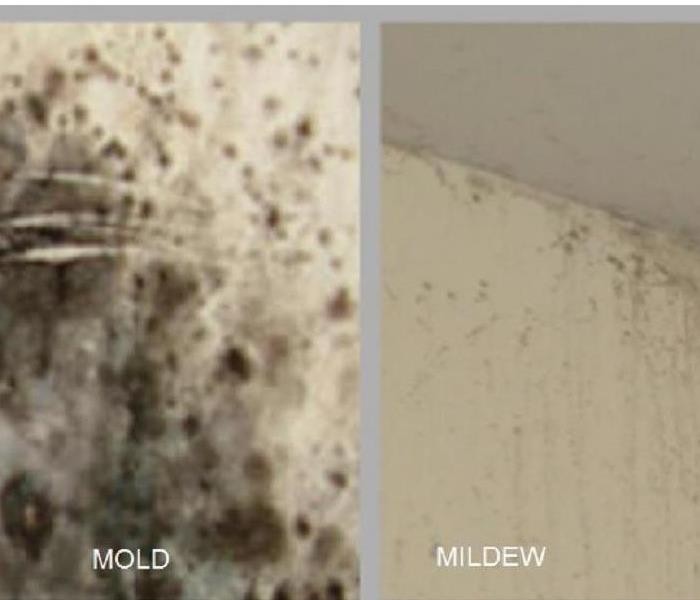 Mold Remediation Is It Or Mildew